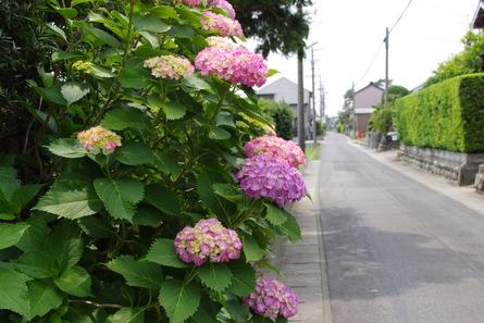 Meijit011