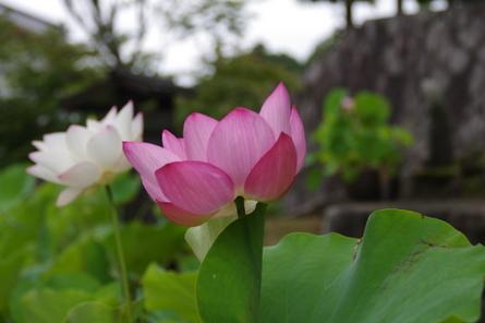 Keimyoji14