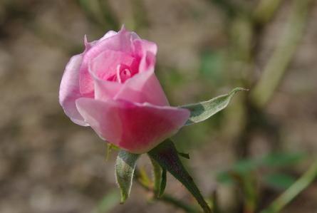 Blumen017