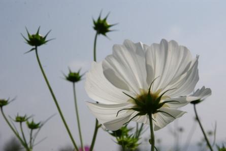 Blumen07