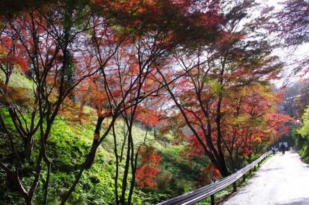Yoshino09