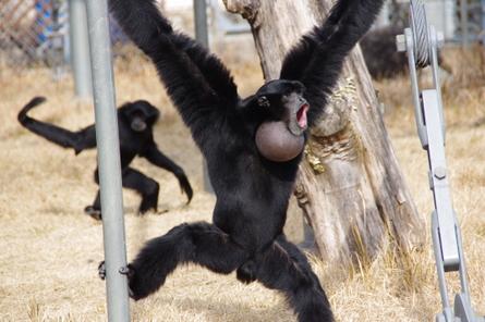 Monkey006