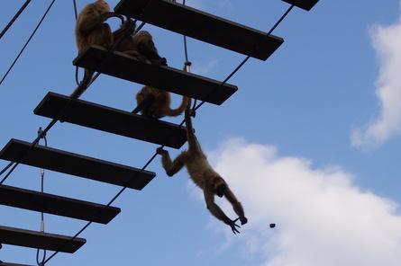 Monkey011