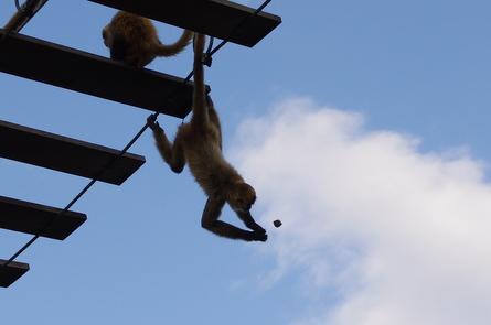 Monkey012
