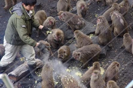 Monkey07