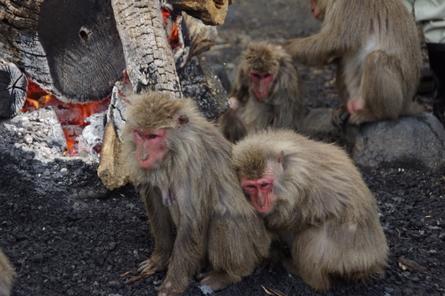Monkey12