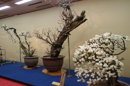 Nagahama14