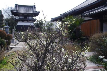 Yamatohina14