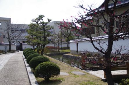 Yamatohina16