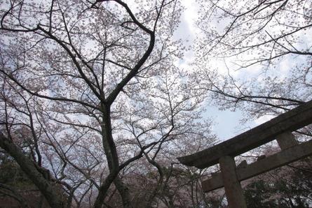 Yamanobe05