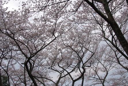 Yamanobe06