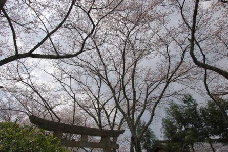 Yamanobe07