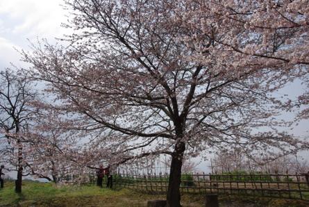 Yamanobe09