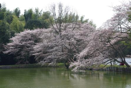 Yamanobe19
