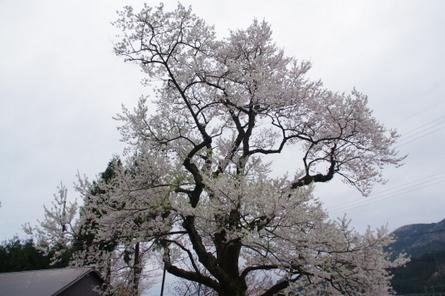 Syouzu02