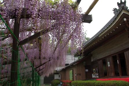 Hinofuji03