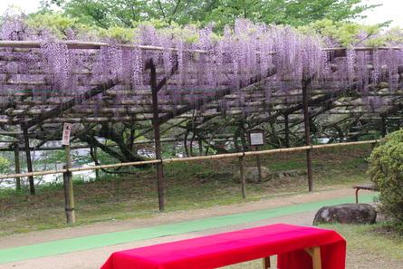 Hinofuji11
