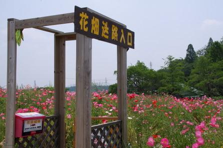Hinageshi02