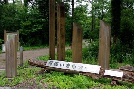 Kawabe01
