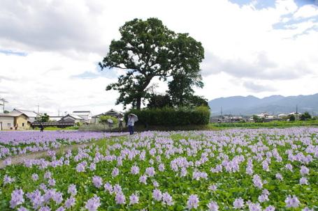 Motoyakushi03