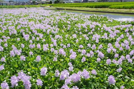 Motoyakushi06