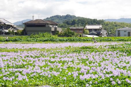Motoyakushi07