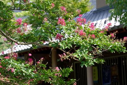 Jizogawa03