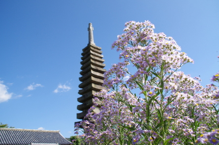 Nara11
