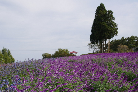 Aoyama02