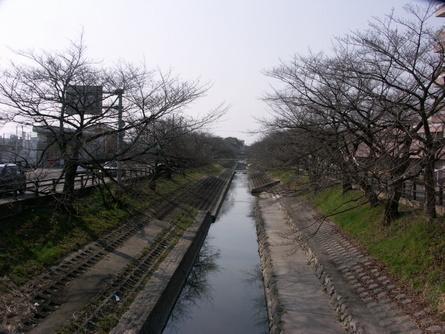 Yokooji04