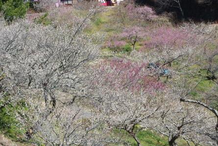 Tsukigase
