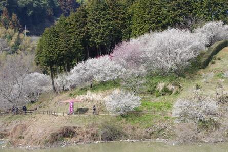 Tsukigase13