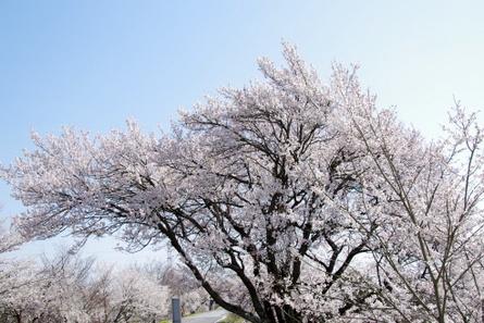 Kisogawa07