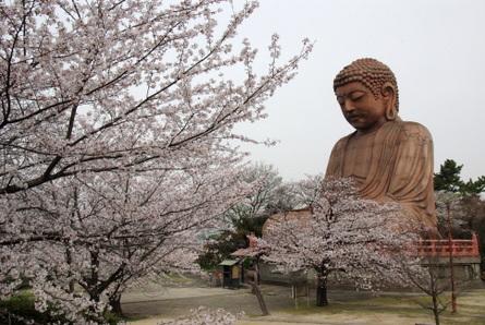 Shiawase01