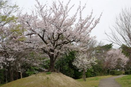 Shiawase05