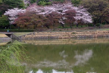 Shiawase06