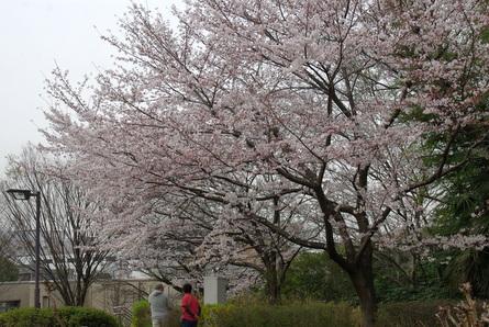 Shiawase15