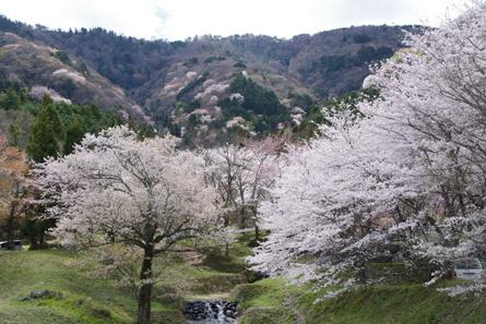 Kamagatani02