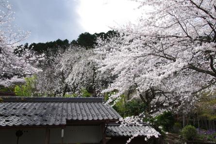 Kamagatani06