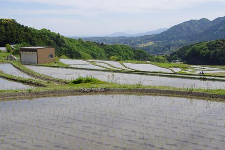Sakamoto07