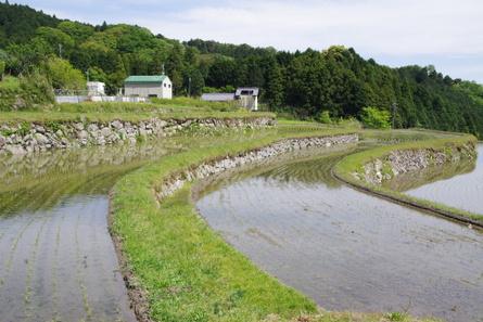Sakamoto10