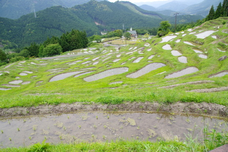 Maruyama13