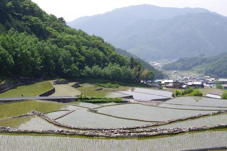 Fukano01