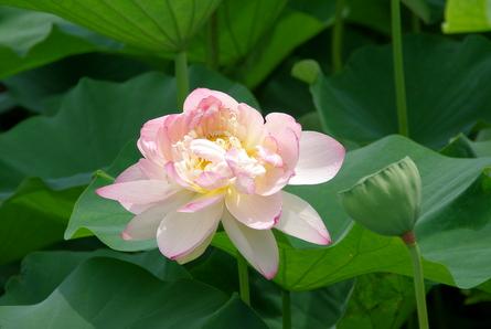 Morikawa05