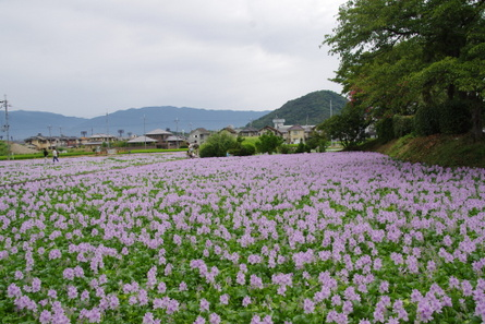 Hotei11