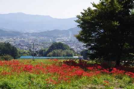 Katsuragi06