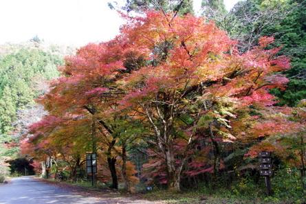 Yokotani011
