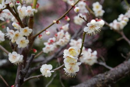 Mukaiyama09