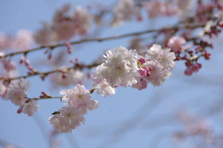 Higashiys03