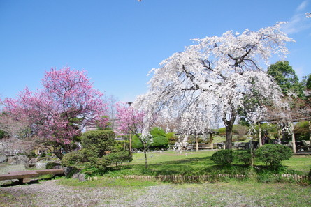 Nagahama11